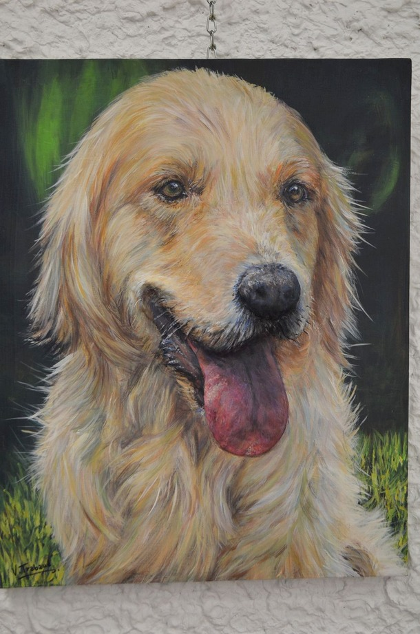 golden retriever - virginie trabaud