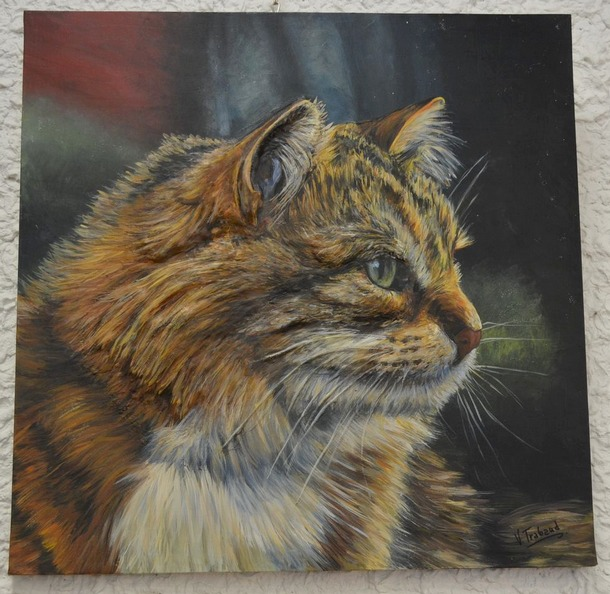 Chat - Portrait - Virginie Trabaud